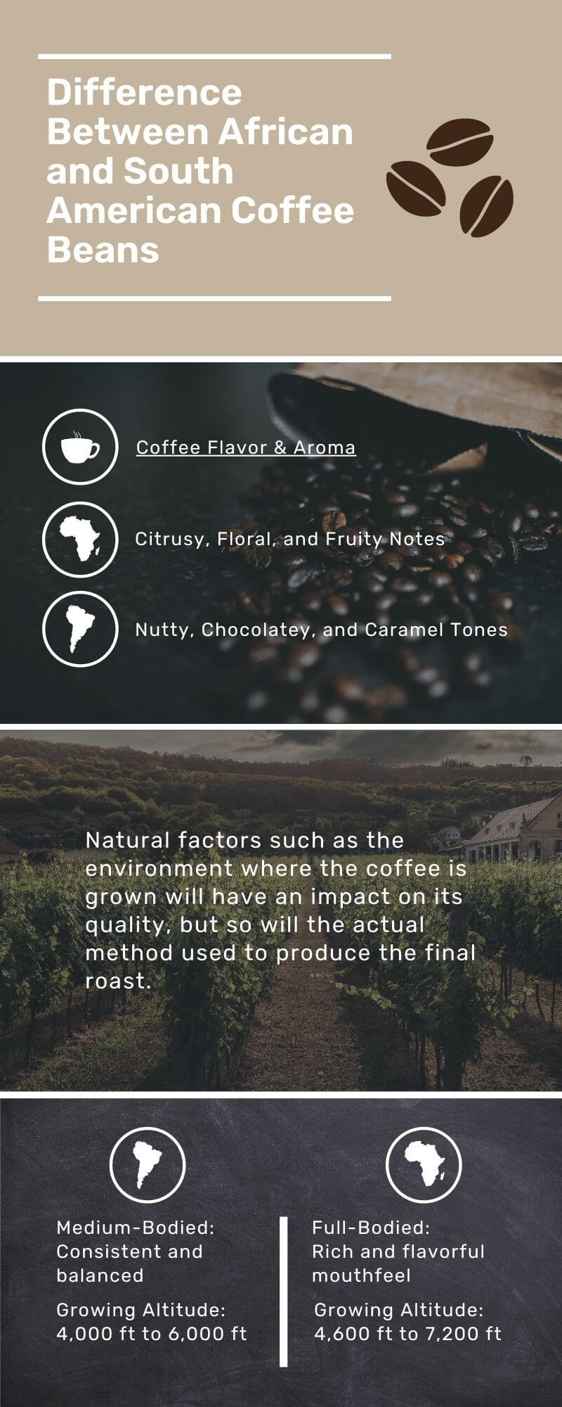 Difference Between African and South American Coffee Infographic